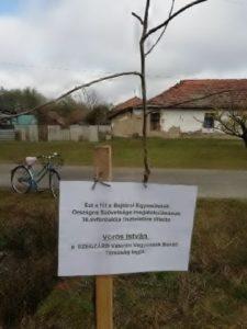 a Vörös István tagunk által, a község polgármestere támogatásával ültetett emlékfa, Rém 2019.11.07.